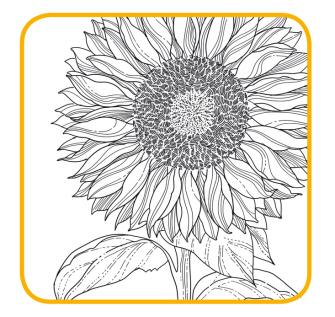 Girasole, il fiore del sole