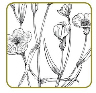 Lino - Una pianta senza tempo
