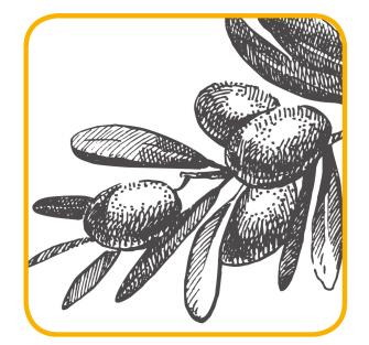 Ulivo, la pianta della Pace